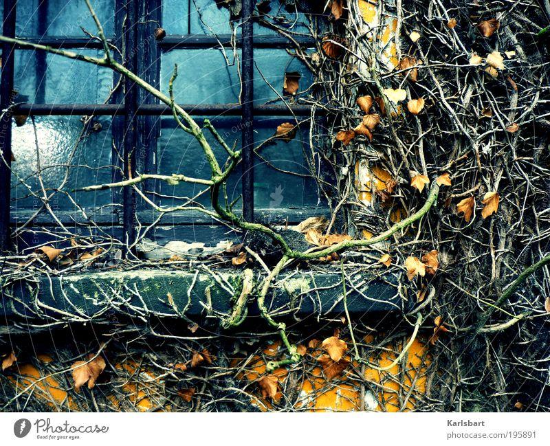hitchcock. Lifestyle Design Häusliches Leben Wohnung Haus Garten Renovieren Arbeit & Erwerbstätigkeit Gartenarbeit Ruhestand Natur Pflanze Efeu Wildpflanze Wald