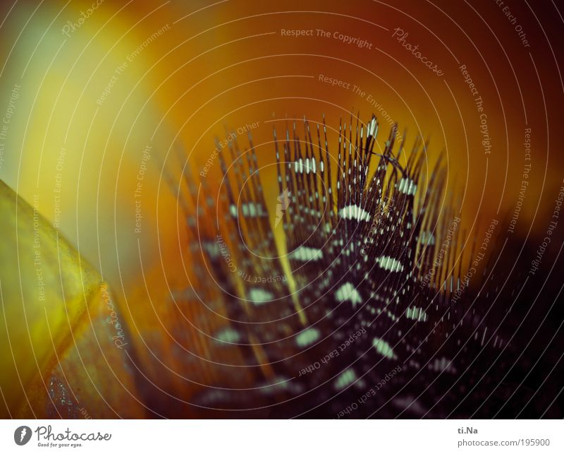 Osterhasi hat eine Feder verloren schwarz gelb Innenarchitektur natürlich Kunst liegen Dekoration & Verzierung gold Makroaufnahme