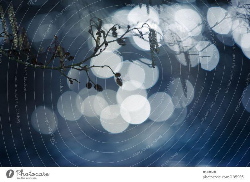 Licht an Natur Sonnenlicht Frühling Herbst Sträucher Zweige u. Äste Coolness dunkel exotisch fantastisch frisch glänzend hell kalt blau weiß Design lichtvoll