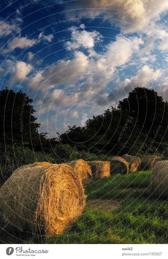Bretonische Landwirtschaft Umwelt Natur Landschaft Pflanze Erde Luft Himmel Wolken Horizont Schönes Wetter Baum Gras Sträucher Stroh Strohballen Feld Wald
