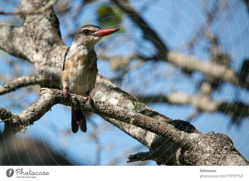 Braunkopfliest Natur Pflanze schön Baum Tier Umwelt klein Vogel Wildtier ästhetisch Ast nah exotisch Tiergesicht Schnabel Geäst