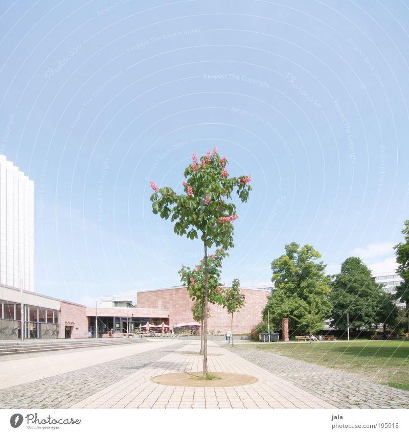 Zentrum Pflanze Baum Park Wiese Stadt Stadtzentrum Haus Hochhaus Platz Bauwerk Gebäude Architektur groß gut hell ästhetisch Chemnitz Farbfoto Außenaufnahme