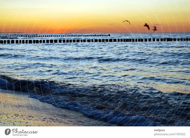 schöne ostsee Wasser Sonne Meer blau Sommer Strand Ferien & Urlaub & Reisen Sand Vogel Wellen Küste Deutschland Klima Ostsee Schönes Wetter Möwe