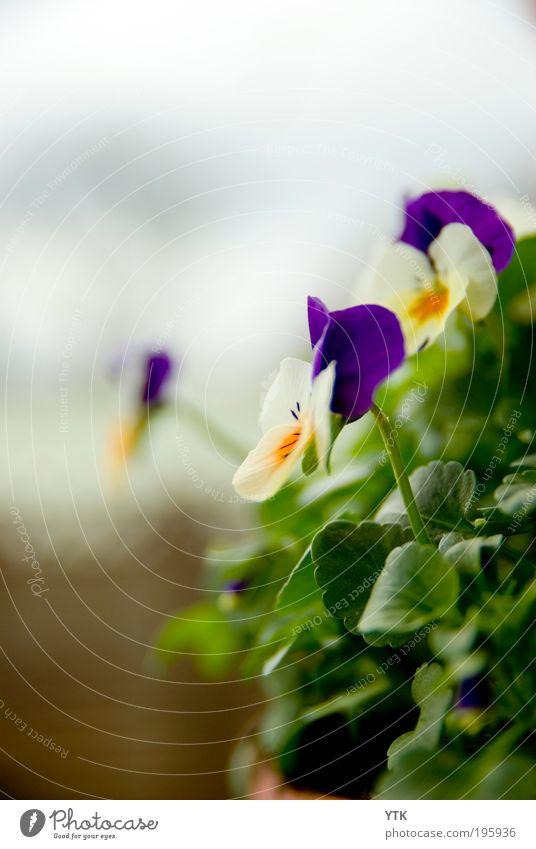 Schwiegermutter? Himmel Natur grün Pflanze Farbe Blatt Wolken Umwelt Wärme Frühling Blüte Garten hell natürlich Wachstum frisch