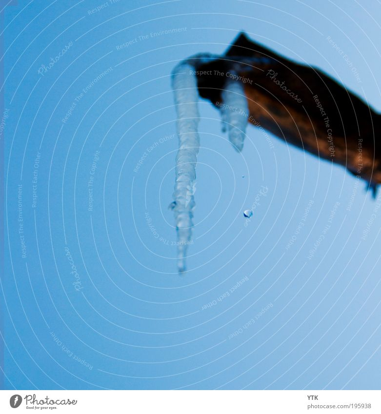 Drop it like it's hot! Natur Wasser blau kalt Schnee Frühling Eis glänzend Wetter Umwelt Wassertropfen nass Frost Klima fallen gefroren