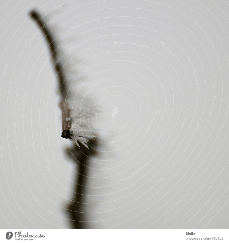 Winterbild mit Frost Natur Pflanze kalt grau Eis Wetter Umwelt Klima rein Ast Spitze natürlich bizarr Kristalle