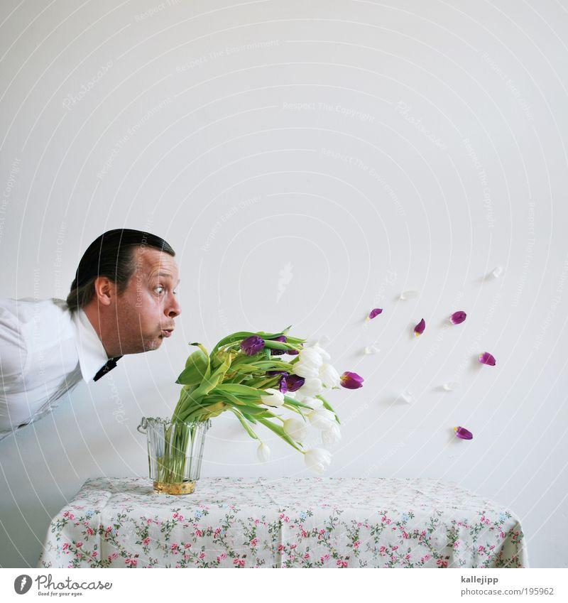 vier jahres-zeiten Mensch weiß Glück maskulin Geburtstag Blume Wunsch Tisch Möbel Sturm Löwenzahn blasen Hemd Blumenstrauß Tulpe Ereignisse