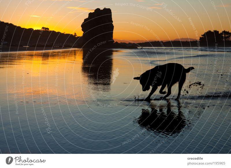 Sumner Beach II Schatzsucher Umwelt Natur Landschaft Sand Luft Wasser Himmel Sonnenaufgang Sonnenuntergang Wellen Küste Meer Neuseeland Tier Haustier Hund 1
