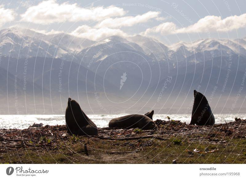 NZ Fur Seal Natur Wolken Tier Erholung Berge u. Gebirge Landschaft Wellen Küste Umwelt Felsen schlafen Sicherheit süß Kommunizieren Tiergruppe weich