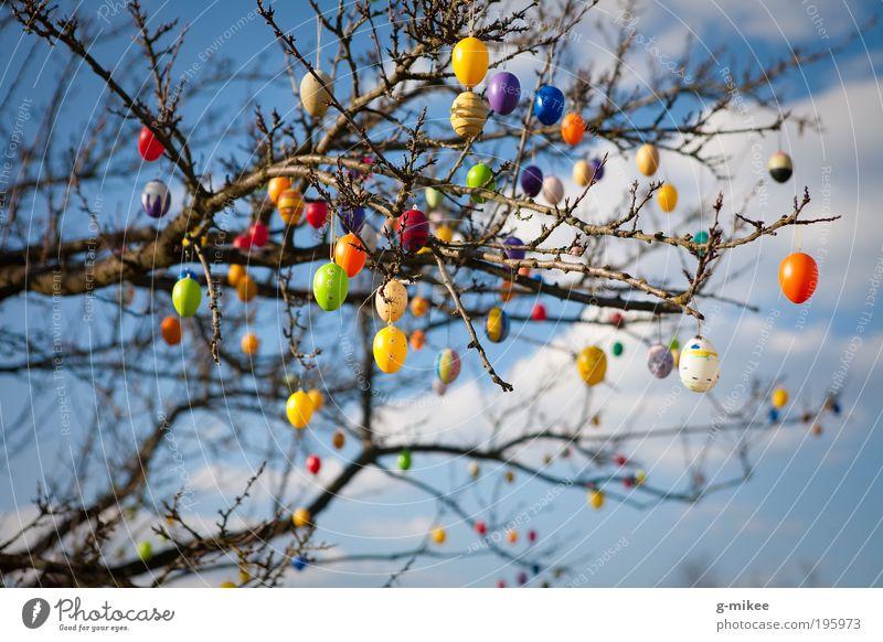 Osterschmuck Natur Himmel Baum blau Frühling Garten Park Luft Feste & Feiern Umwelt Ostern Schmuck Ei Licht