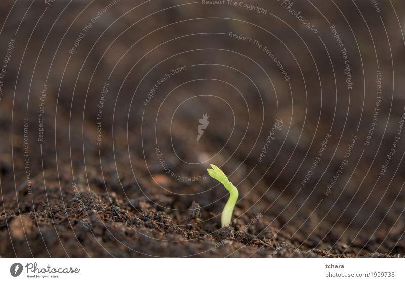 Neue Pflanze Natur grün Baum Hand Blatt Umwelt Leben natürlich klein Garten Wachstum Erde frisch Baby Boden