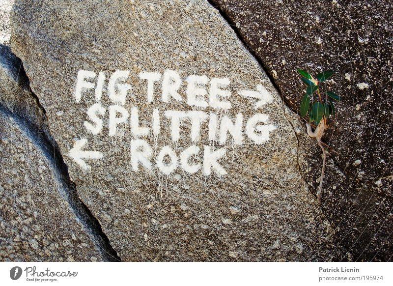 wegweisend ? Natur schön weiß Baum Freude Farbe Erholung Stein Wege & Pfade Linie lustig wandern Felsen Fragen Schriftzeichen Reisefotografie