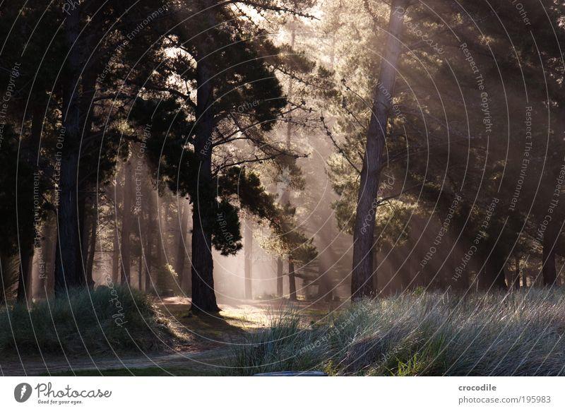 New Zealand V Umwelt Natur Landschaft Pflanze Urelemente Sonnenlicht Schönes Wetter Baum Grünpflanze Wald Urwald ästhetisch außergewöhnlich bedrohlich natürlich