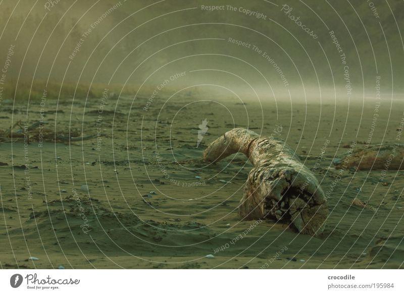 New Zealand VI Umwelt Natur Landschaft Urelemente Erde Sand Luft Wetter schlechtes Wetter Nebel Baum Hügel Küste Strand Meer Traurigkeit Sehnsucht Heimweh