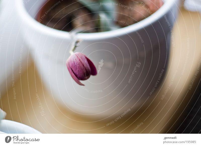 Hals über Topf Blume Pflanze Frühling Traurigkeit Trauer Müdigkeit Appetit & Hunger beweglich Sorge Topf Durst Fensterbrett Topfpflanze Fensterplatz