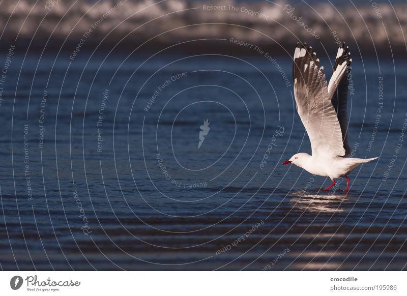 New Zealand VII schön Tier Bewegung Vogel Zufriedenheit Kraft fliegen Wildtier ästhetisch außergewöhnlich authentisch stehen Coolness bedrohlich Lebensfreude