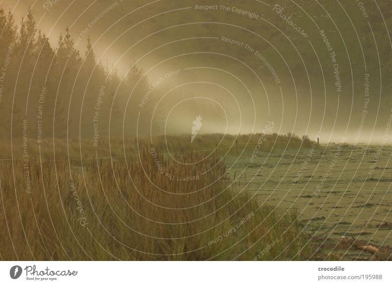New Zealand IX Natur Himmel Pflanze Freude Strand Wald Sand Landschaft Wellen Küste Nebel Umwelt Fröhlichkeit einzigartig Urwald Bucht