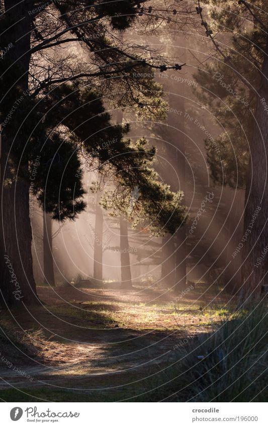 New Zealand XIV Pflanze Baum Wald Urwald Gefühle Stimmung Tugend Fröhlichkeit Zufriedenheit Lebensfreude Vorfreude Sympathie Respekt ästhetisch Einsamkeit