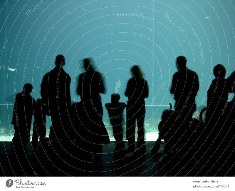 Aquarius Zoo Aquarium Silhouette Publikum Menschengruppe Schatten Erwachsene