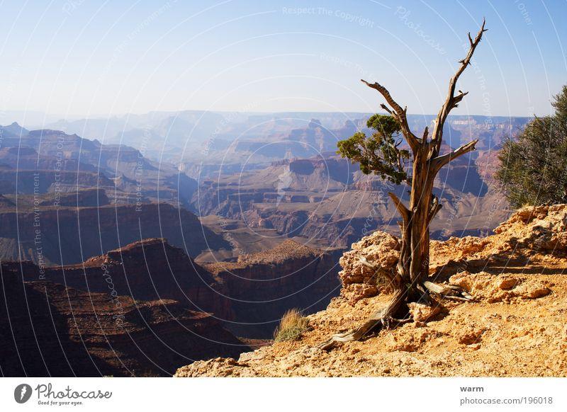 Grand Canyon Umwelt Natur Landschaft Erde Sonnenlicht Schönes Wetter Baum Schlucht Wüste blau braun gelb grau ruhig Fernweh Farbfoto Außenaufnahme Menschenleer