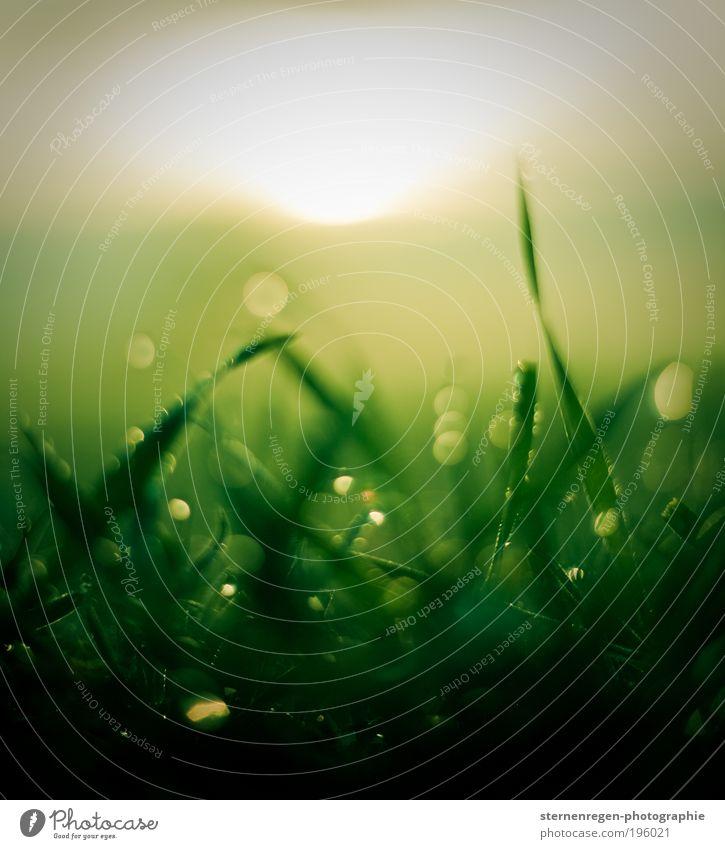 Glitzergras Natur grün Pflanze Sommer Wiese Gras Frühling Feld Wassertropfen Erde Tropfen Tau Strukturen & Formen