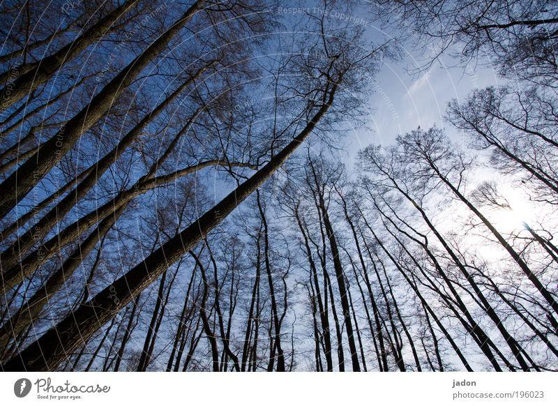 bäume sind auch nur menschen Himmel blau Pflanze Baum Ferne Wald Tanzen Wachstum Neigung Zusammenhalt diagonal Aggression Brandenburg uneinig
