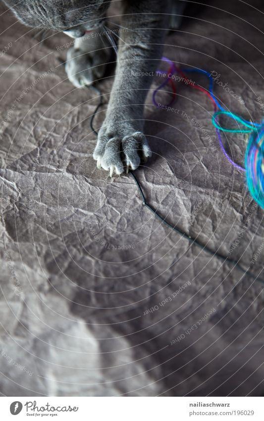 Katzenspielzeug blau Freude Tier Gefühle Spielen grau Katze Zufriedenheit braun Fröhlichkeit ästhetisch Neugier niedlich silber Haustier Schleife