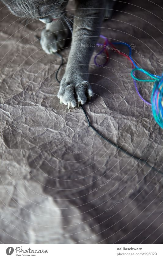Katzenspielzeug Tier Haustier 1 Wolle Wollknäuel Schleife Spielen ästhetisch niedlich blau braun grau silber Gefühle Freude Fröhlichkeit Zufriedenheit Neugier