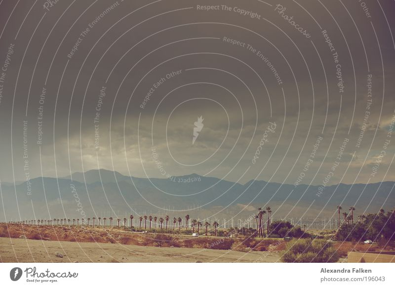 Palm Springs II Natur Himmel Pflanze Sommer Wolken Straße dunkel Berge u. Gebirge Landschaft Wind Wetter Umwelt Energie USA bedrohlich Klima