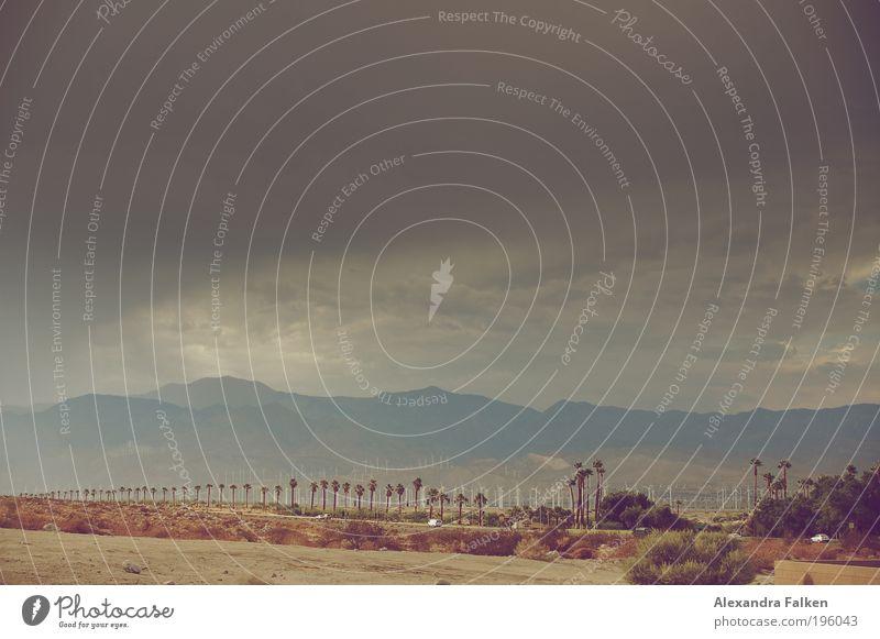 Palm Springs II Umwelt Natur Landschaft Pflanze Himmel Wolken Gewitterwolken Sommer Klima Klimawandel Wetter schlechtes Wetter Unwetter Wind Sturm bedrohlich