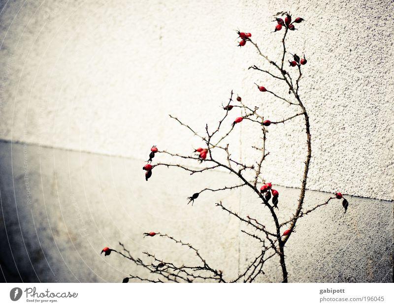 Hinterhofidylle oder die unendliche Trostlosigkeit des Seins Natur alt Pflanze Winter Wand Umwelt Blüte Mauer Traurigkeit Fassade Armut trist Wandel & Veränderung Sträucher retro trocken