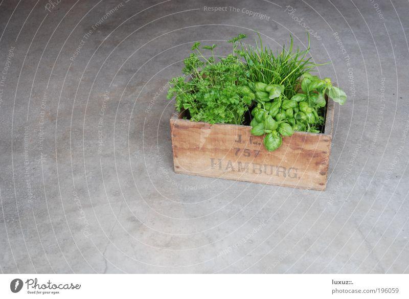 Hamburger Gemüsekiste grün Gesundheit Lebensmittel frisch Ernährung Schriftzeichen Boden Buchstaben Küche Kräuter & Gewürze Dienstleistungsgewerbe Bioprodukte