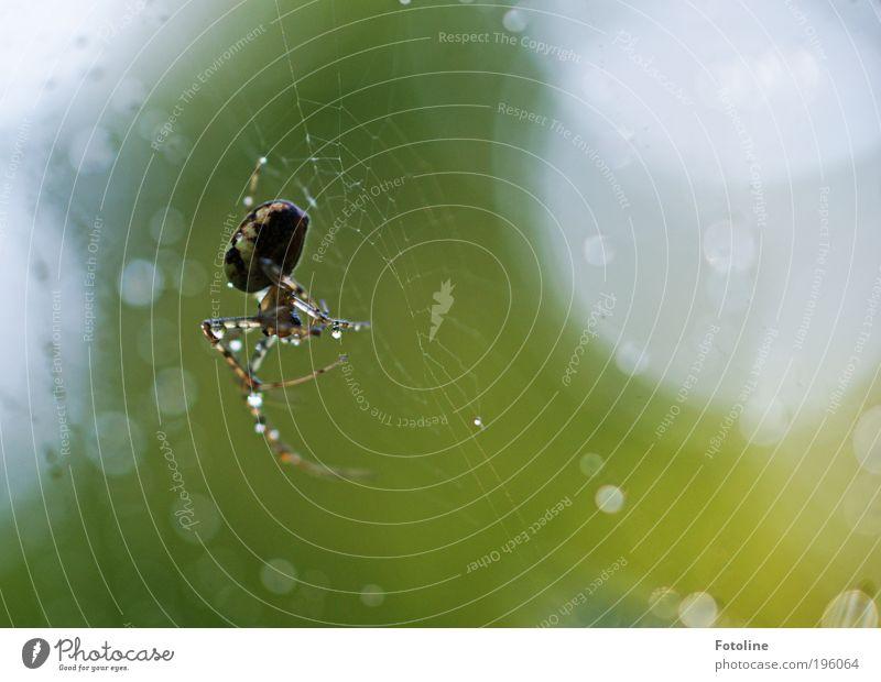 Nützlich, aber ... Umwelt Natur Pflanze Tier Urelemente Luft Wasser Wassertropfen Sonnenlicht Frühling Sommer Klima Wetter Schönes Wetter Regen Wärme Park