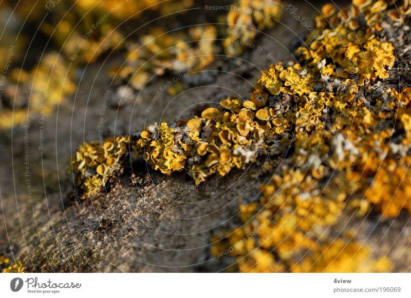 gmoos Pflanze gelb Wand grau Mauer Umwelt Felsen einzigartig Verfall Denkmal Moos Urelemente Wahrzeichen Gebäude