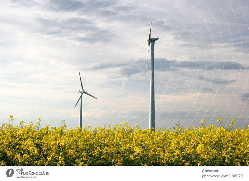 Windkraftanlagen über Rapsfeld Natur Himmel Pflanze Sommer gelb Blüte Landschaft Feld Wetter Umwelt Industrie modern Energiewirtschaft Technik & Technologie
