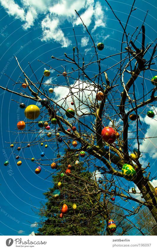 Nach Ostern ist vor Ostern März Garten Baum Sträucher Gänseblümchen Osterholz Osterei Blumenstrauß osterschmuck Ei Himmel Himmel (Jenseits) Wolken Frühling
