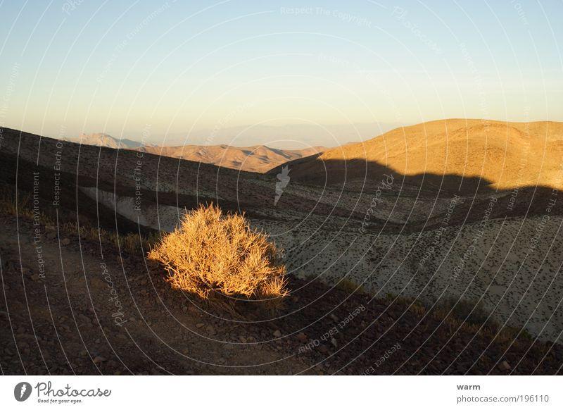 Licht und Schatten Natur Himmel Pflanze ruhig Berge u. Gebirge Landschaft Umwelt Sträucher Wüste Warmherzigkeit Schönes Wetter Fernweh Wolkenloser Himmel