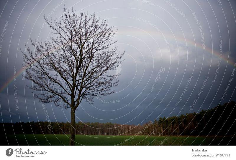 regenbogen auf dem weg nach hause Baum Pflanze Ferne Tier Wald Farbe kalt Wiese Freiheit Landschaft Frühling träumen Feld Zufriedenheit Horizont Ausflug