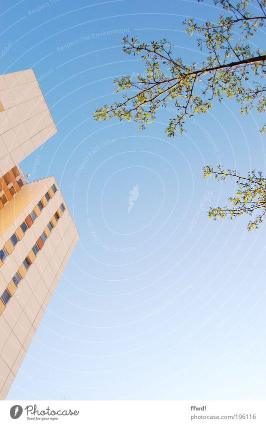 Frühling meets Vorstadt Umwelt Natur Pflanze Luft Himmel Wolkenloser Himmel Klima Schönes Wetter Baum Blatt Ast Kleinstadt Stadt Skyline Haus Hochhaus Gebäude