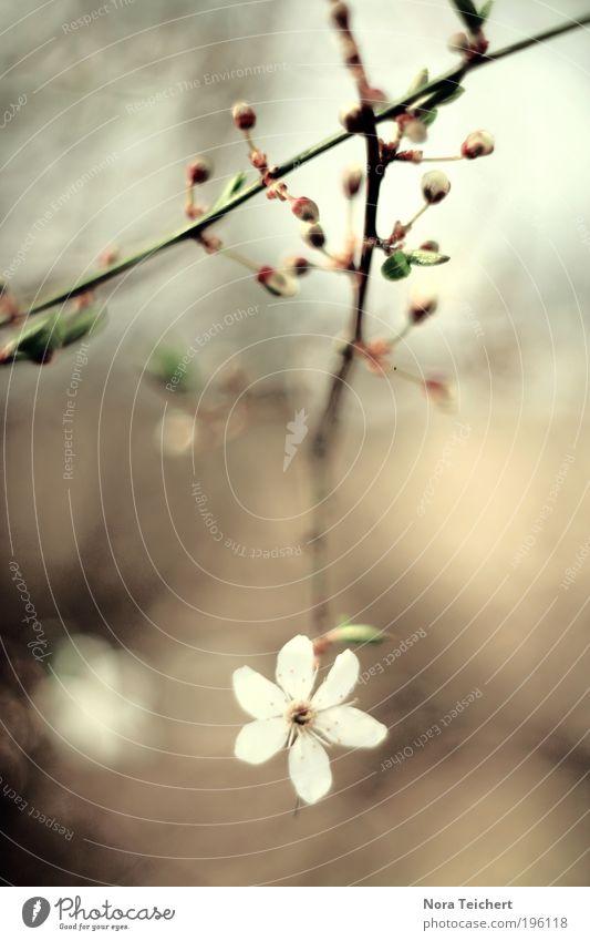 weil ich es liebe ... Umwelt Natur Landschaft Pflanze Tier Frühling Sommer Klima Baum Blume Sträucher Blatt Blüte Grünpflanze Wildpflanze Ast Zweig Park