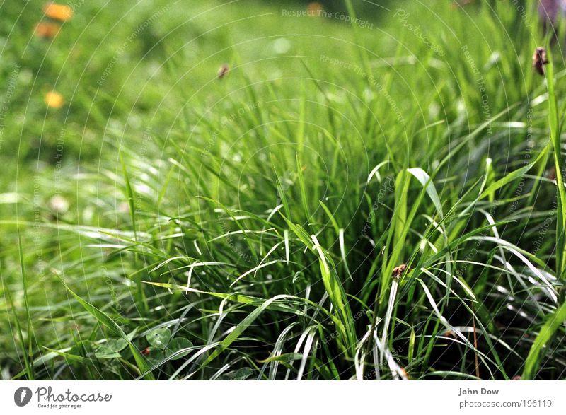 Ein Stück Sommer Frühling Pflanze Gras Grünpflanze Wiese Biene natürlich grün Frühlingsgefühle Natur sommerlich Insekt Honigbiene Grasbüschel Halm grasgrün