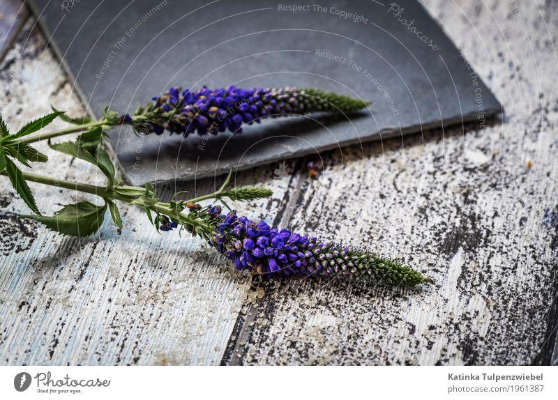 Zwei Lavendel-Blumen mit Blüten (Macro-Aufnahme) Dekoration & Verzierung Kunst Kunstwerk Natur Pflanze Frühling Wildpflanze exotisch Stein Holz Erholung