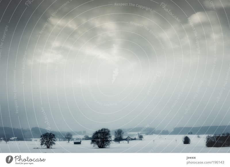 Düstere Legenden Landschaft Himmel Wolken Winter Wetter schlechtes Wetter Nebel Schnee Baum dunkel kalt ruhig Einsamkeit Erholung Schneelandschaft Idylle