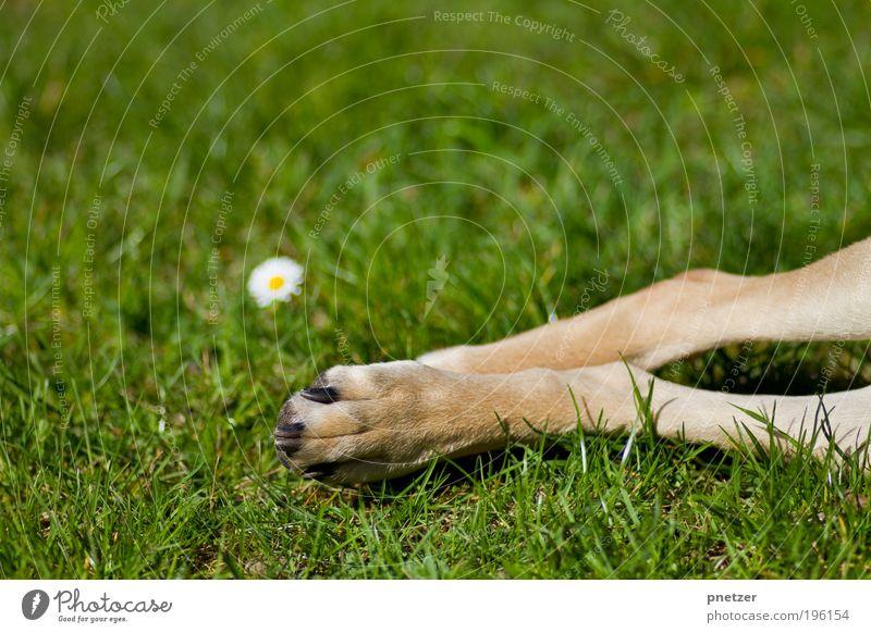 Grasgrün Natur Hund Sommer Blume Freude Tier Wiese Umwelt Spielen Gras Glück Blüte Garten Frühling Park lustig