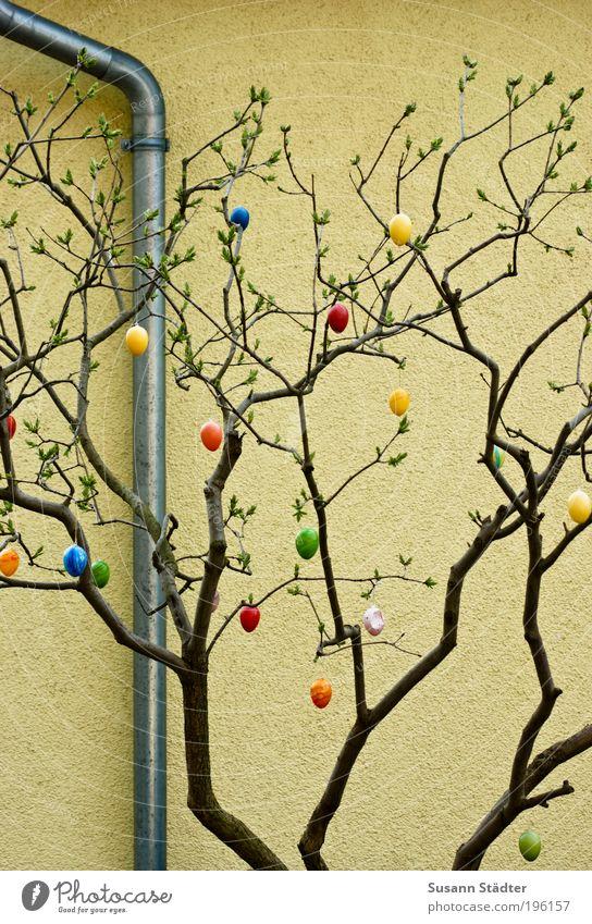 Die Eierei ist längst vorbei Dekoration & Verzierung hängen Osterei sprießen Frühling Pflanze Rohrleitung Wand Farbfoto mehrfarbig Detailaufnahme Tag Ast Zweig