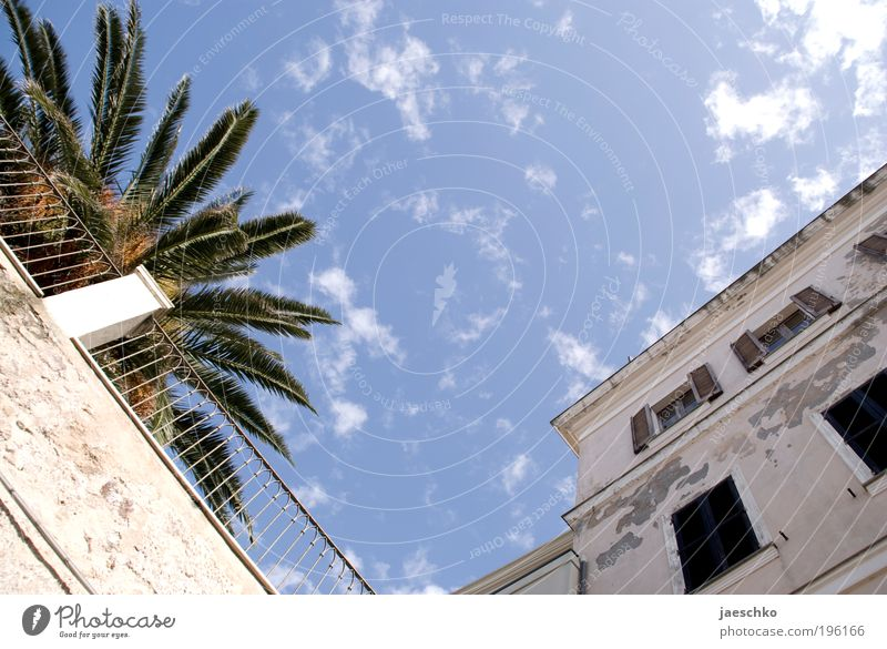 Mediterrane Ecke Ferien & Urlaub & Reisen Tourismus Sommerurlaub Himmel Schönes Wetter Palme Italien Dorf Kleinstadt Altstadt Haus Platz Fassade Garten genießen