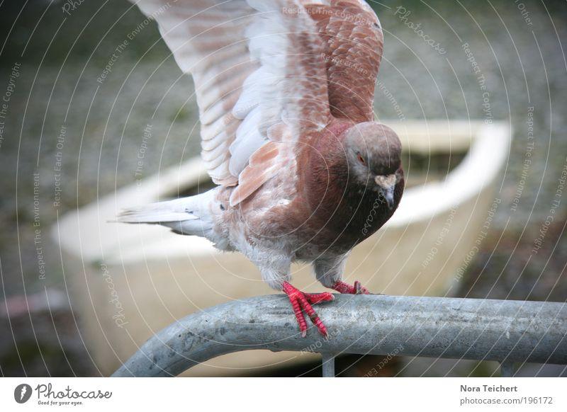 Free as a bird Schifffahrt Bootsfahrt Ruderboot Tier Wildtier Vogel Taube Flügel Feder Stahl Bewegung fliegen ästhetisch Ferne frei schön braun Gefühle Stimmung
