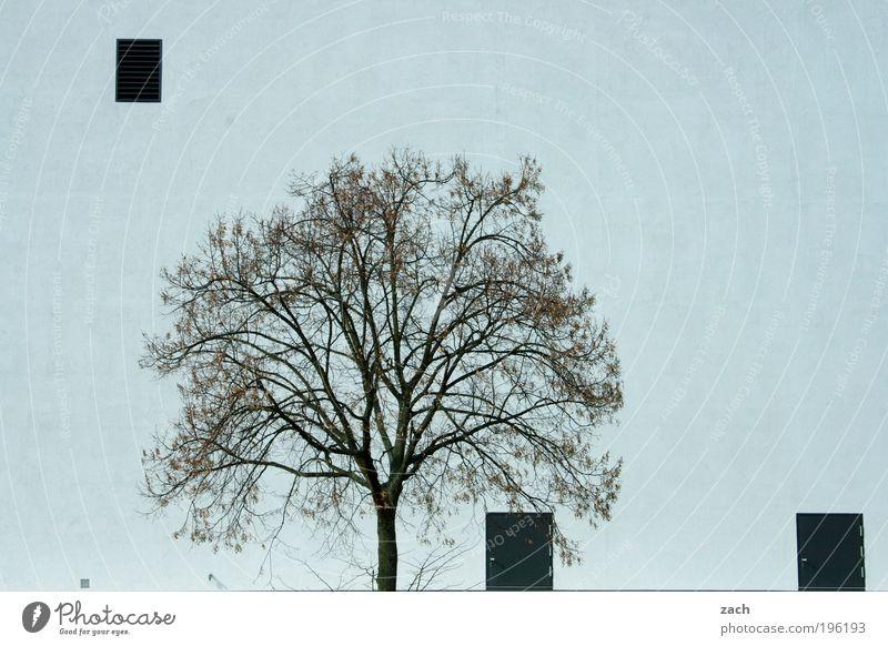 .|. weiß Baum Pflanze Haus Fenster Stein Architektur Tür Fassade Ordnung Wachstum Fabrik Bauwerk Industrieanlage