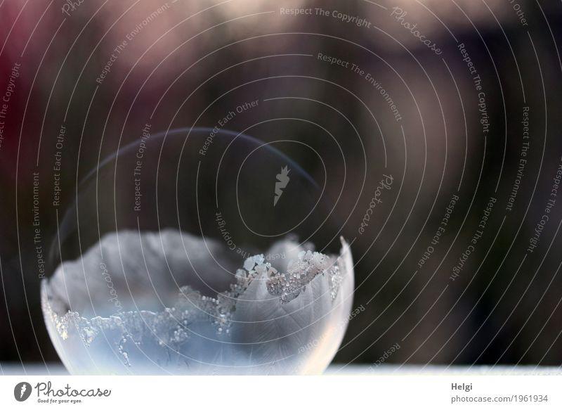 filigrane Eiskunst VIII Winter Frost Seifenblase frieren liegen ästhetisch außergewöhnlich schön einzigartig kalt braun grau weiß bizarr Vergänglichkeit