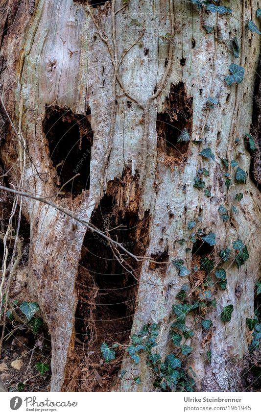 Scream in wood Karneval Halloween Mensch Kopf Gesicht 1 Natur Pflanze Baum Wald beobachten schreien Aggression bedrohlich dunkel gruselig hässlich natürlich